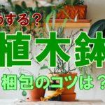 引越しのとき植木鉢はどうする?植物を安全に運ぶためのコツとは?
