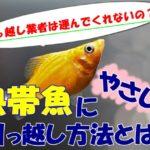 引っ越す時の熱帯魚の運び方は??引っ越し業者は運べないの??